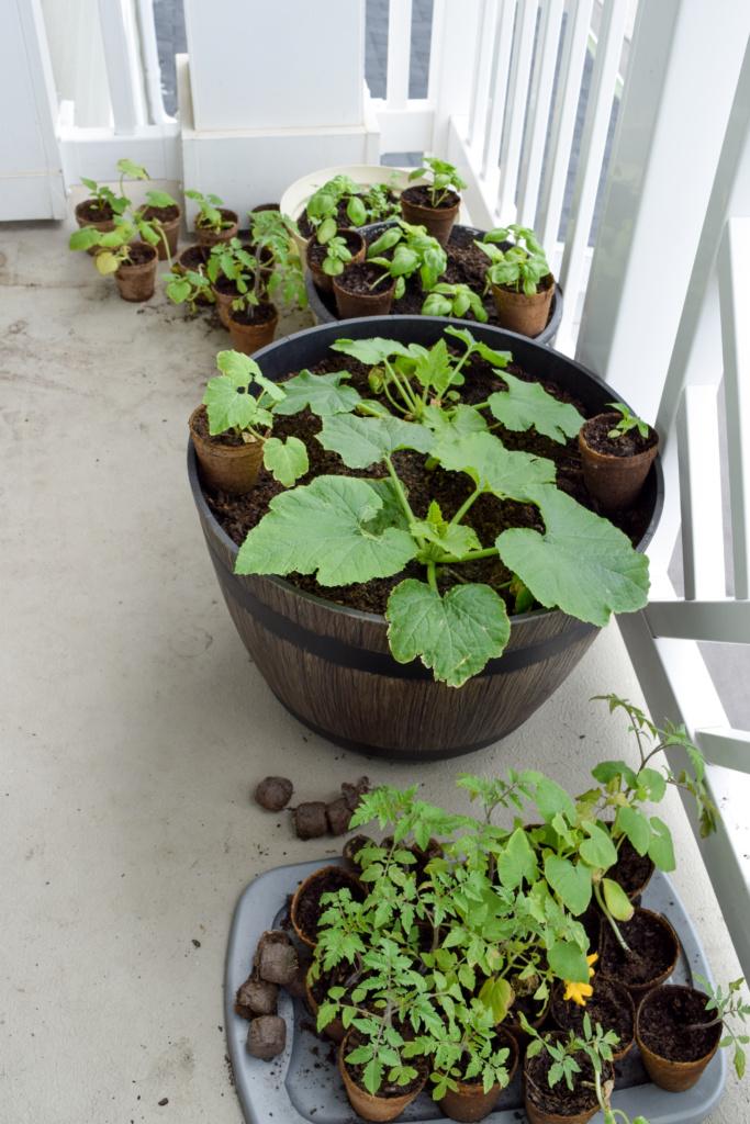 Broccoli Carrot Salad and my garden